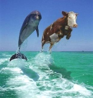 Is it true that cows can run run faster than horses sounds alittle